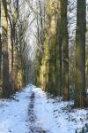 Kerstwandeling op Mariendaal Buitenhuis bij Kinderboerderij Buiten-gewoon, Beukenlaan 8, 5363 RA Velp
